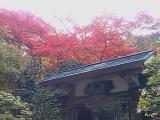 今日は箱根4